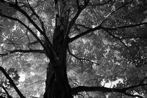 black-and-white-tree-photo