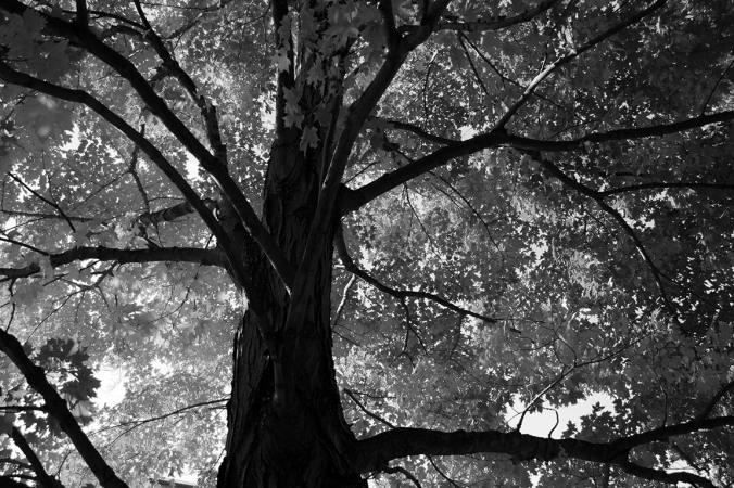 black-and-white-tree-photo