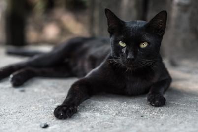 black-cat-names
